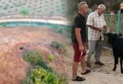Antalyada kayıp kurbanlık keçi dronela bulundu
