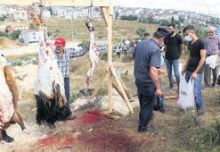 İstanbul'da manzara yine aynı Boş tarlalar mezbahaya döndü