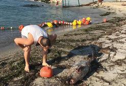 Tekirdağda ölü yavru yunus karaya vurdu