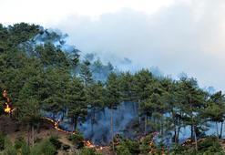 Kahramanmaraşta orman yangını Kontrol altına alındı