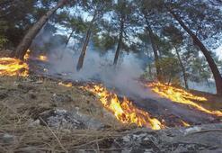 Kahramanmaraşta orman yangını