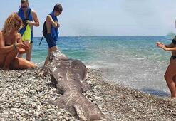 Sahile vuran köpek balığı ölüsüyle turistler fotoğraf çektirdi