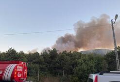 Son dakika haberi: İstanbulda korkutan orman yangını