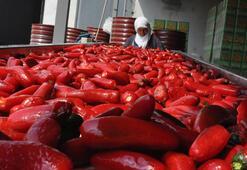 Pandemi salça ihracatını artırdı