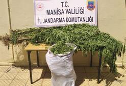 Manisada 2 kişi 12 kilo kubar esrarıyla yakalandı