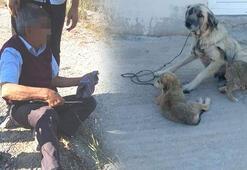 Kocaelinde yaşandı Yaşlı adam köpeğe tecavüz ederken yakalandı