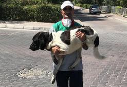 Üç bacaklı sokak köpeği ile temizlik işçisinin yürek ısıtan dostluğu