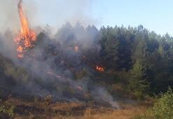 Orman yangınlarına  karşı sıkı tedbir