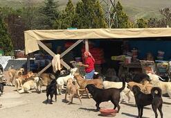 Ankaradaki sokak köpeklerinin İnci Ablası