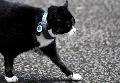 Diplomat kedi Palmerston İngiltere Dışişleri Bakanlığı'ndan emekli oldu