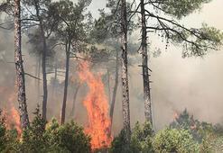 Bursadaki orman yangınında 5 dönüm alan zarar gördü