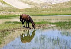 Munzurda atlar doğaya renk kattı