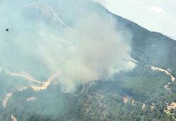 Mendereste, ağaçlandırma sahasında yangın