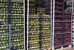 Tarım ürünleri ihracatı Kovid-19a rağmen arttı