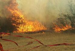 Sakaryada orman yangını çıktı