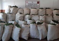 Diyarabakırda narko-terör operasyonu 1 milyon 119 bin kök kenevir ele geçirildi