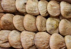 Aydında sezonun ilk kuru inciri borsaya geldi