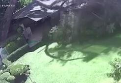 Üsküdarda ağaç kesimi iddiaları: Site sakinleri güvenlik kamerasıyla cevap verdi