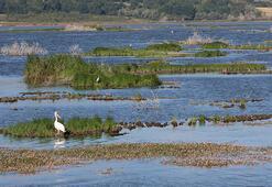 Yüzen adaları karaya oturan Ladik Gölünde bataklık tehlikesi