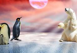 Soğuk seven hayvan dostlarımız
