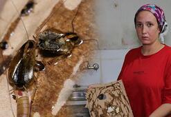 Adanada bir mahalleyi böcek bastı Prizlerin içinden bile böcek çıkıyor