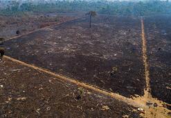 Brezilyanın Amazon ormanları yanmaya devam ediyor