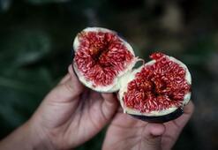 Türkiyeden 22 günde 5 milyon dolarlık incir ihracatı