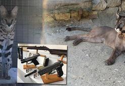 Silah kaçakçılığı baskınında ortaya çıkan manzara polisi bile şaşırttı