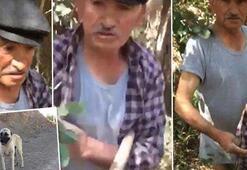 Köpeğe tecavüz ederken yakalanmıştı Tarım ilacı içerek intihara kalkıştı