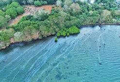 Çevre felaketi Yük gemisinden sızan petrol mangrov ormanlarını yok edebilir