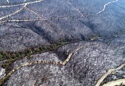 Kozandaki yangında, 280 futbol sahası büyüklüğünde alan kül oldu