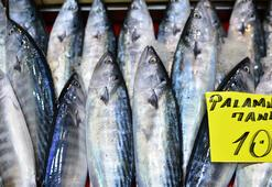 Denizin kırmızı etli balığı palamut 10 liradan tezgahlarda