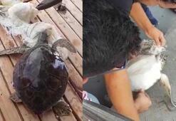 Kaplumbağayı kurtarmak için gezi teknesini durdurdu