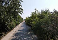 Asırlık ağaçların gölgesindeki antik yolun tescili turizmde hareketlilik beklentisi doğurdu