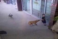 Küçük çocuğa köpek saldırısı kamerada