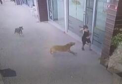 Eyüpsultanda korku dolu anlar Küçük çocuk köpeklerin saldırısına uğradı