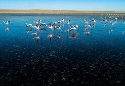 Flamingoların yaşam alanı daralıyor