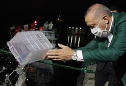 Son dakika... Erdoğanın başlattığı açık artırmada 1 kasa balığa servet ödendi