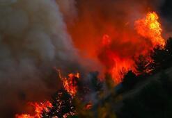 Ünlüler orman yangınları için çağrıda bulundu