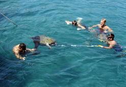 Yaralı deniz kaplumbağası, 3 saatte kurtarıldı
