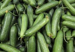 Ağustosta fiyatı en fazla artan ürün salatalık
