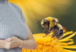 Bal arısı meme kanserini tarihe gömebilir Resmen yok etti