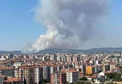 Uşakta orman yangını
