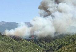 Son dakika... Hatayda orman yangını