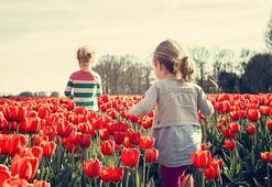 Hollanda Hakkında Bilgiler; Hollanda Bayrağı Anlamı, 2020 Nüfusu, Başkenti, Para Birimi Ve Saat Farkı