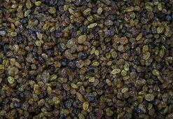 TMO, Manisada kuru üzüm alımına başladı