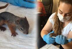 Annesiz kalan yavru sincaplar rehabilitasyon merkezinde bakıma alındı