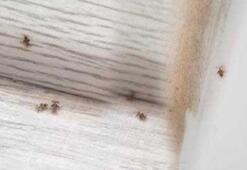 Kocaelide 3 ilçeyi böcekler istila etti Isırıyorlar, endişeliyiz