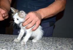 Avcılar'da otomobillerin motoruna giren yavru kedileri itfaiye kurtardı