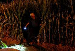 Dur ikazına rağmen kaçtı Polis mısır tarlasında şüpheliyi aradı
